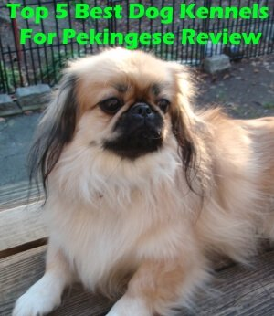 Top 5 Best Dog Kennels For Pekingese in 2018 Review