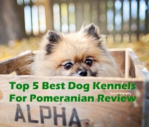 Top 5 Best Dog Kennels For Pomeranian in 2018 Review