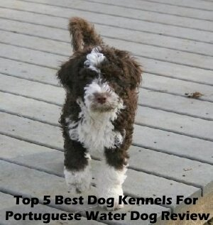Top 5 Best Dog Kennels For Portuguese Water Dog in 2020 Review