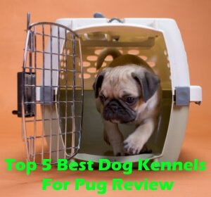 Top 5 Best Dog Kennels For Pug in 2020 Review