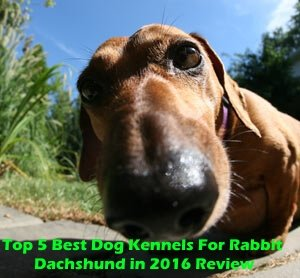 Top 5 Best Dog Kennels For Rabbit Dachshund in 2018 Review