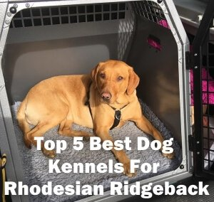 Top 5 Best Dog Kennels and Cages For Rhodesian Ridgeback in 2019 Review