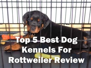 Top 5 Best Dog Kennels and Cages For Rottweiler in 2018 Review