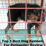 5 Best Dog Kennels and Cages For Harrier in 2016 Review