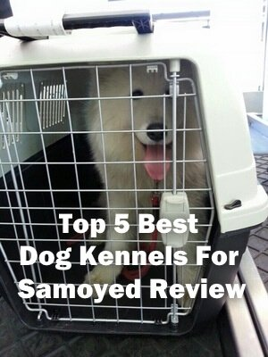 Top 5 Best Dog Kennels and Cages For Samoyed in 2020 Review