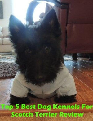 Top 5 Best Dog Kennels For Scotch Terrier in 2019 Review