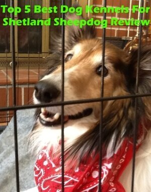Top 5 Best Dog Kennels For Shetland Sheepdog in 2018 Review