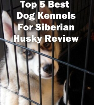 Top 5 Best Dog Kennels and Cages For Siberian Husky in 2019 Review