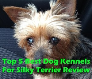 Top 5 Best Dog Kennels For Silky Terrier in 2019 Review