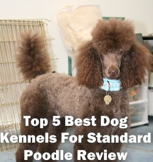 Top 5 Best Dog Kennels and Cages For Standard Poodle in 2018 Review