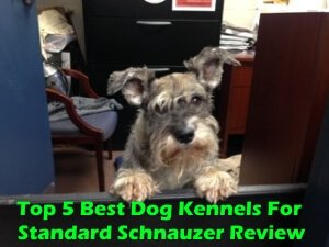 Top 5 Best Dog Kennels For Standard Schnauzer in 2020 Review