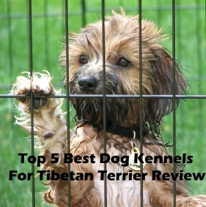 Top 5 Best Dog Kennels For Tibetan Terrier in 2018 Review