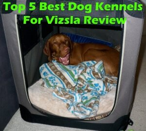 Top 5 Best Dog Kennels and Cages For Vizsla in 2018 Review