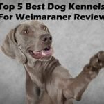 Top 5 Best Dog Kennels and Cages For Weimaraner in 2016 Review