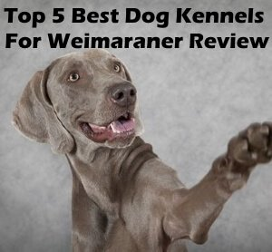Top 5 Best Dog Kennels and Cages For Weimaraner in 2019 Review