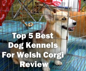 Top 5 Best Dog Kennels For Welsh Corgi in 2018 Review