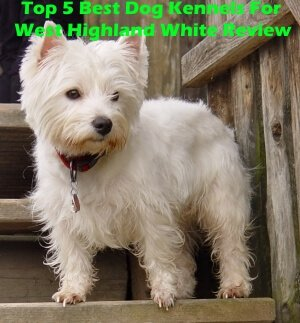 Top 5 Best Dog Kennels For West Highland White in 2020 Review