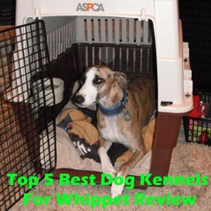 Top 5 Best Dog Kennels For Whippet in 2018 Review