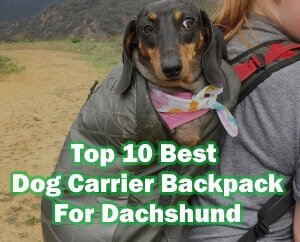 Best Dog Carrier Backpack For Dachshund