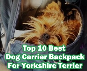 Best Dog Carrier Backpack For Yorkshire Terrier