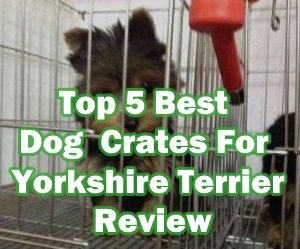 Best Dog Crates For Yorkshire Terrier