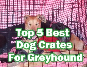 Top 5 Best Dog Crates For Greyhound