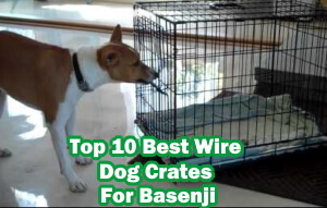Top 10 Best Wire Dog Crates For Basenji