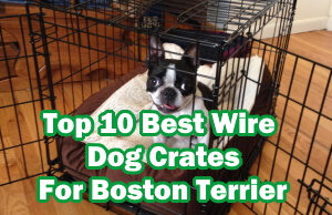 Top 10 Best Wire Dog Crates For Boston Terrier