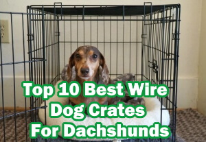 Top 10 Best Wire Dog Crates For Dachshunds